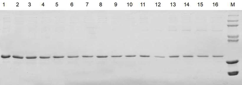 Tag-free protein purification