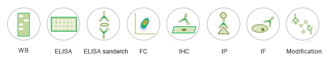 Applications-of-custom-antibody