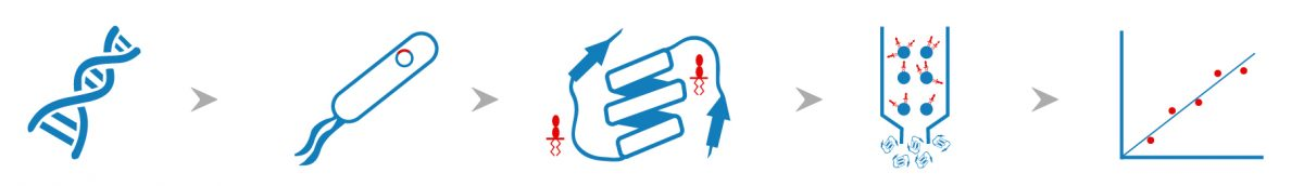 Endotoxin Removal Service