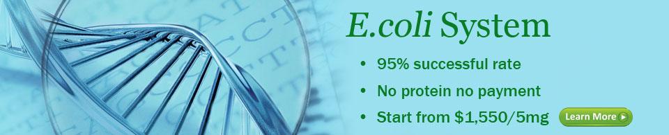 e.coli-protein-expression-service
