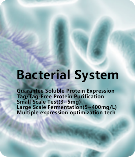 bacterial protein expression service
