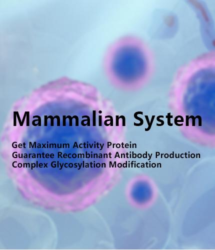 mammalian protein expression service