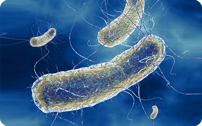 bacterial-system