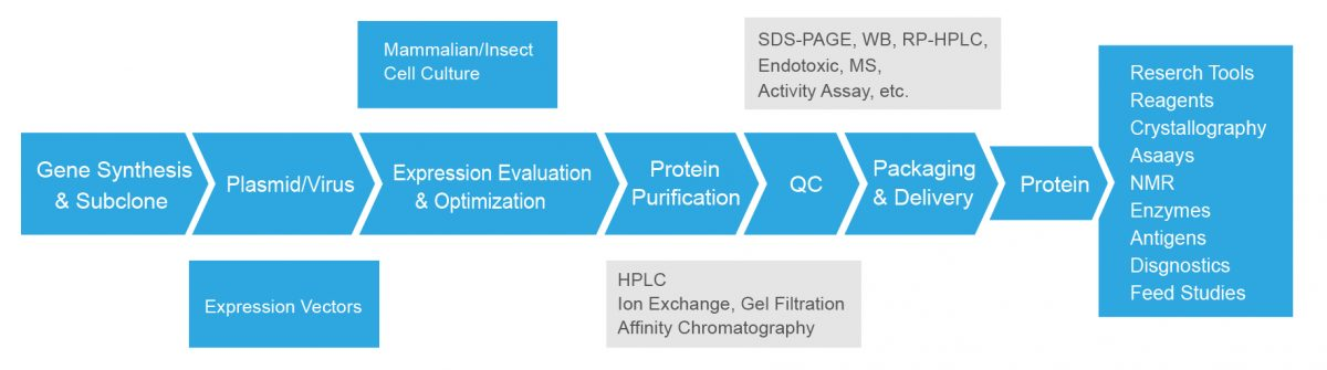 Recombinant Protein Definition   Recombinant-Protein com