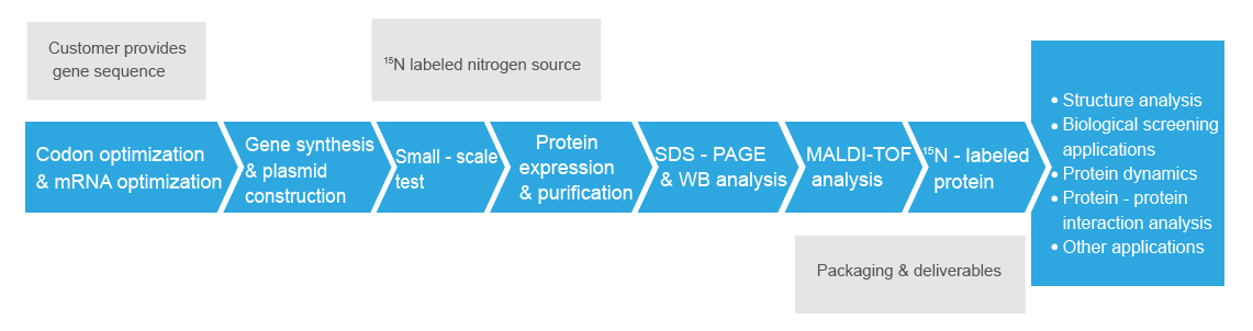 labeled-protein-expression-process