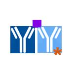 custom antibody