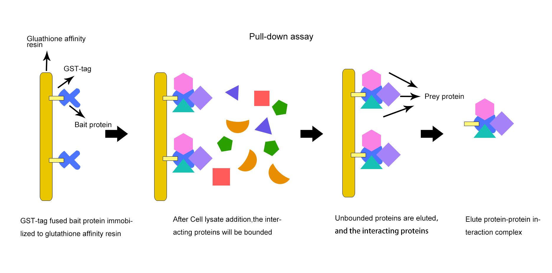 proteins essay