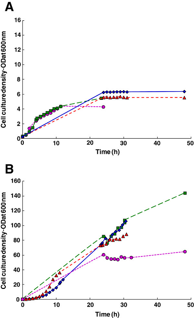 High cell density fermentation study on <em>E. coli</em> strain