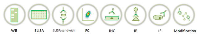 Applications of custom antibody