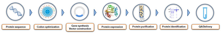 bacterial protein expression service process