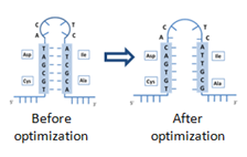 mrna structure optimization case study