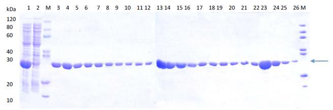 e.coli protein expression - case study