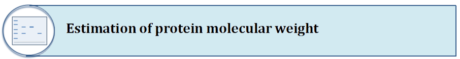 Estimation of protein molecular weight
