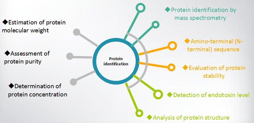Protein identification and characterization