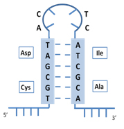 mRNA with stem-loop structure for transient expression